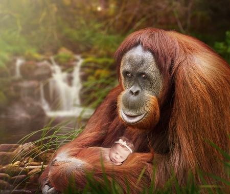Kikka Apinamies